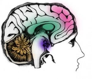 Latihan untuk Mengoptimalkan 5 Fungsi Kognitif Otak Anda