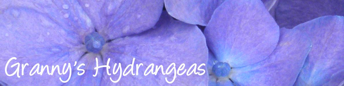 Granny's Hydrangeas