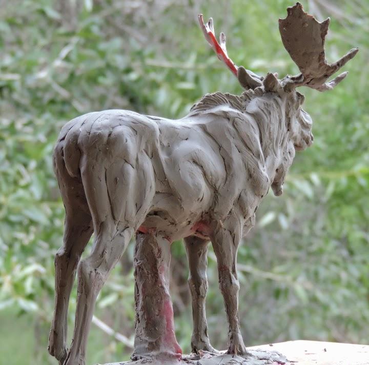 Moose Skeleton Anatomy 2018 Images Pictures Moose Anatomy