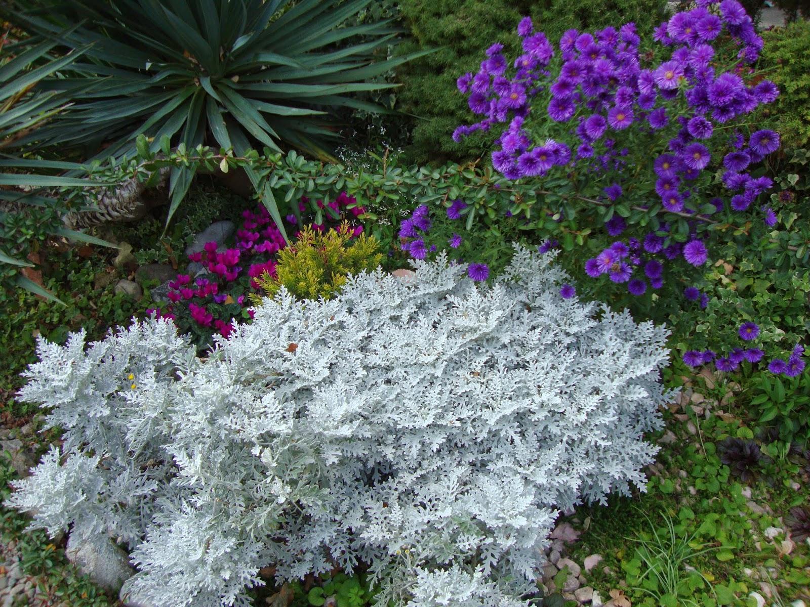 Un piccolo giardino in città: Un tocco di grigio in giardino