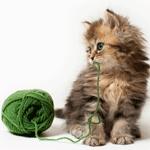 Le chaton a besoin de jouer