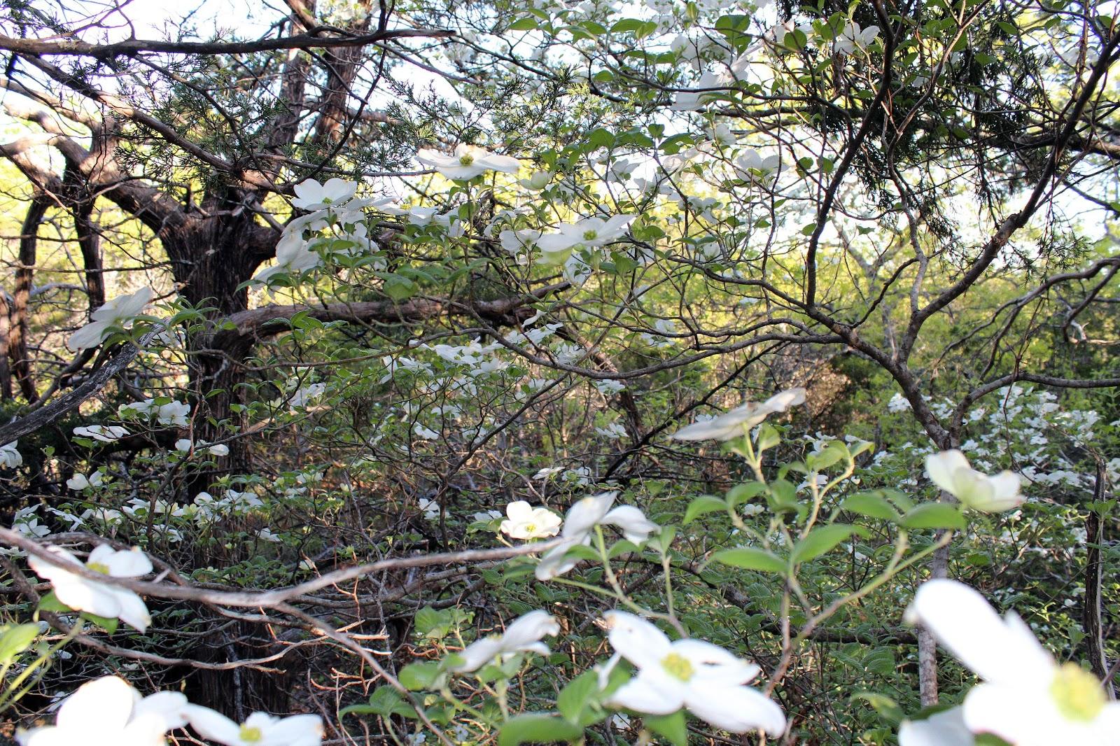 Dallas Trinity Trails Dogwood Canyon And Cedar Ridge
