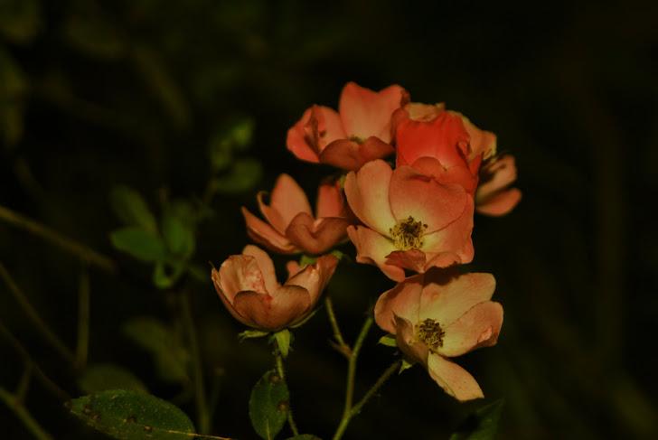 A mesma Flor