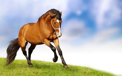 Hermoso caballo trotando por los pastizales