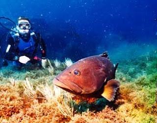Submarinismo en Tabarka