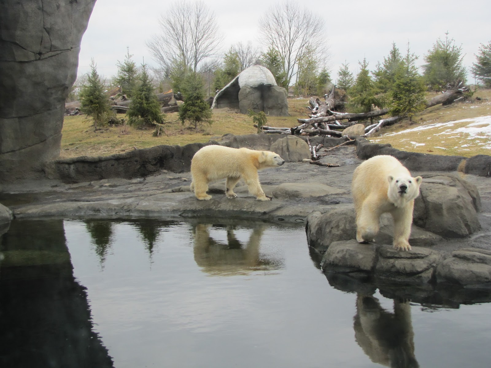 Best Polar bear exhibi...