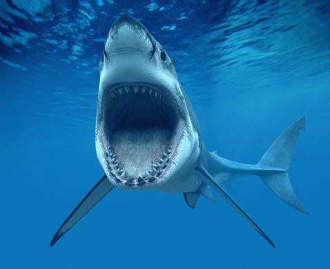 10 Spesies Hiu yang Hampir Punah di Dunia: Great White Shark