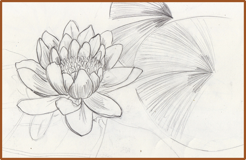 Water lily pad drawing
