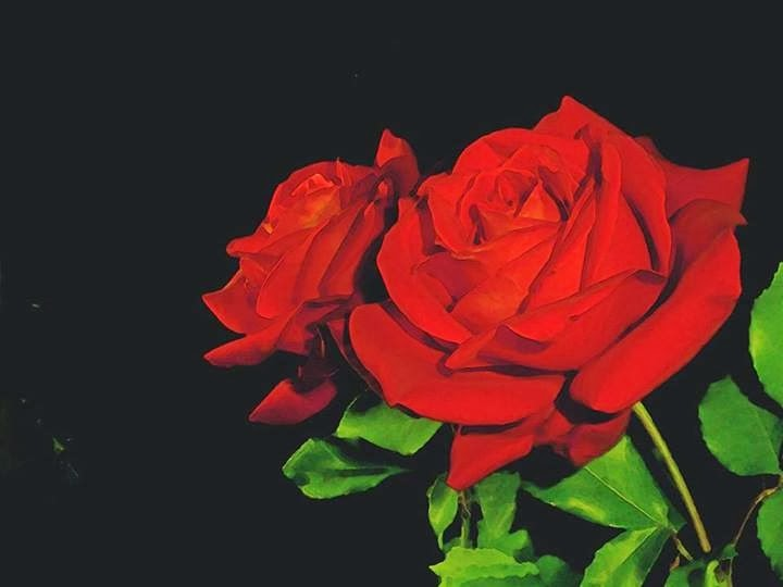 Picture Of Beautiful Pair Rose Flowers with Black Background Images Wallpapers