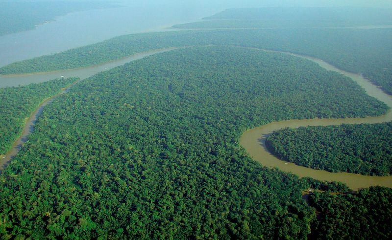 Amazon Rainforest aerial view