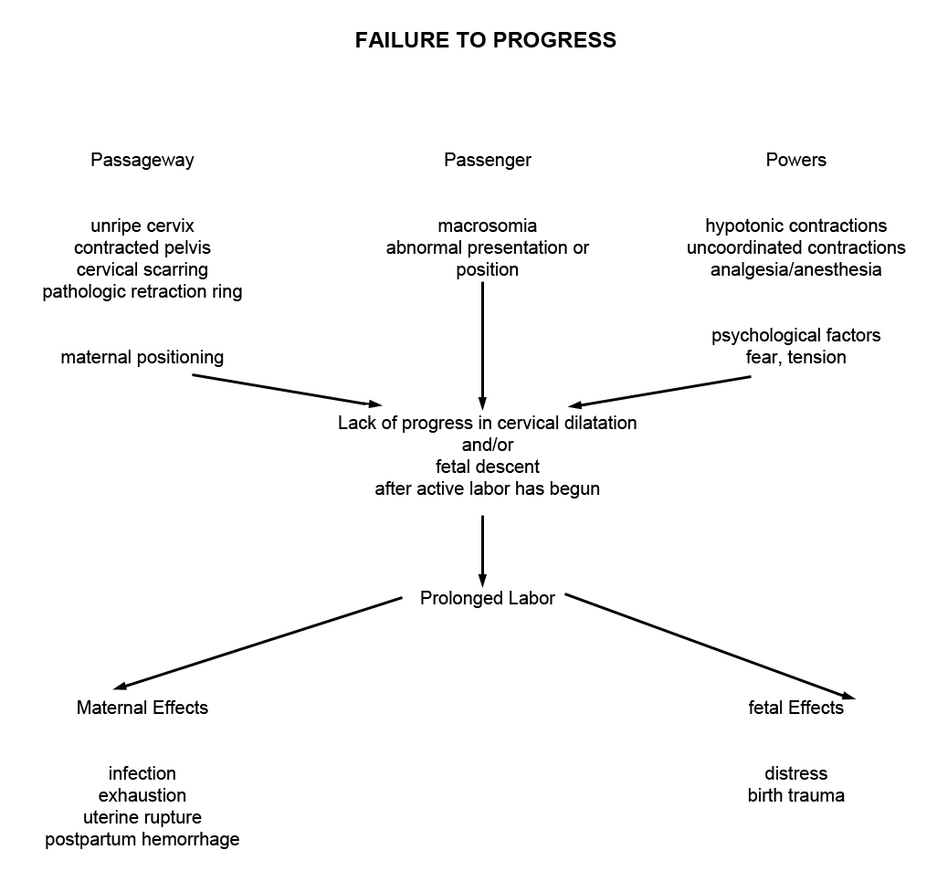 labor and delivery pathophysiology Powerpoint templates  assessment may need to be done rapidly client may have history of previous precipitous labor and delivery desire to push  pathophysiology.