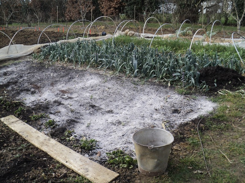 Le potager des violettes cendre de bois au potager for Cendre de bois au jardin