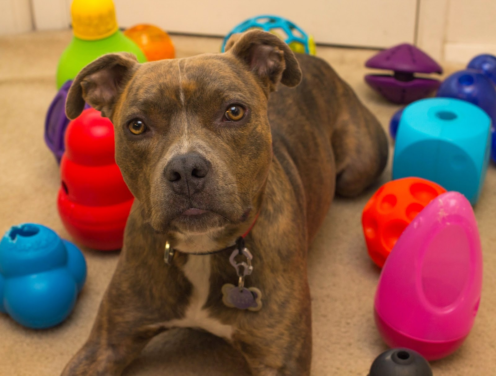 Best Dog Toys : What are the best dog toys luv my dogs