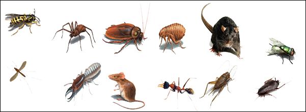 Tips para el hogar - Plaga hormigas en casa ...