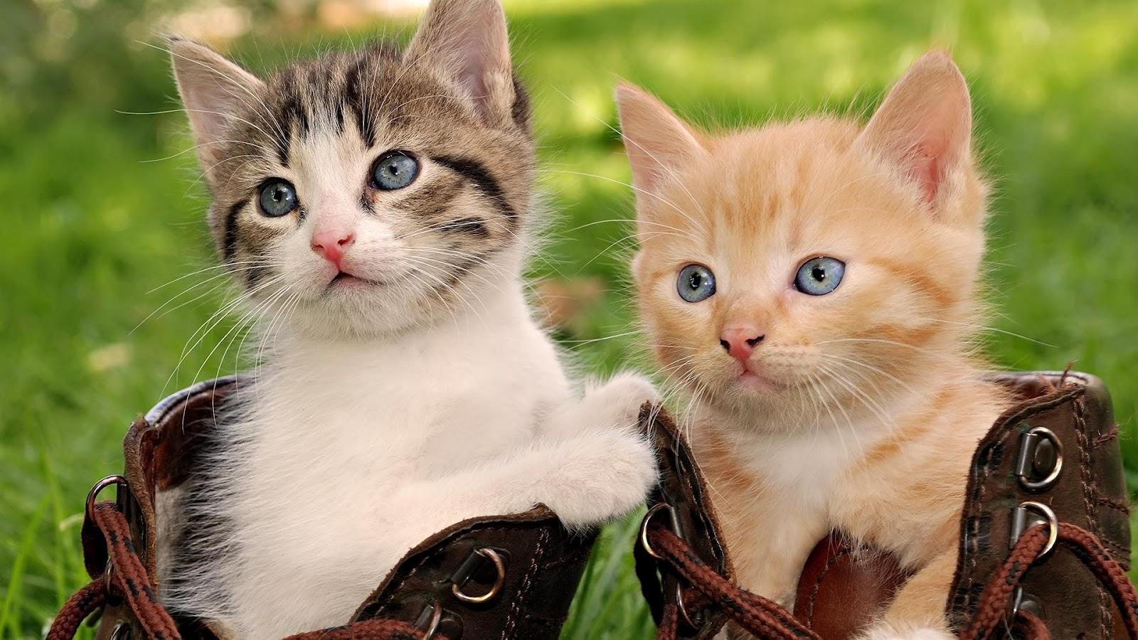Cute cats #4 | Cute Cats