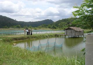 bangladesh fish culture, fish, fish culture,