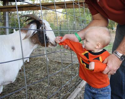 Noah petting goat