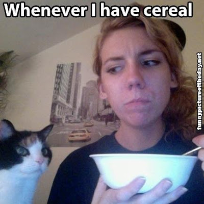 Whenever I Have Cereal Funny Lol Cats Animals Begging For Food Girl Humor