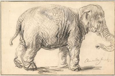 An elephant Rembrandt