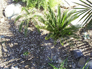 The weather in the Phoenix area can be hard on tropical plants, .
