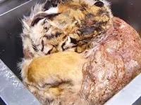 Sajikan Menu Daging Harimau, Restoran Ini Digerebek Polisi