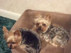 Molly & Daisey