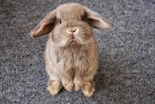 bunny scorn