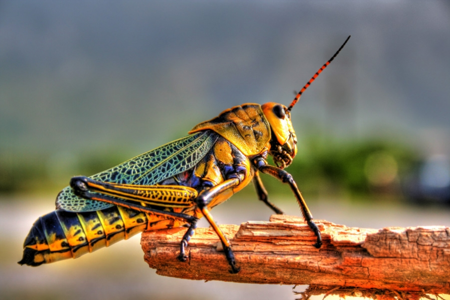 essays on day of the locust Study day of the locust research papers for citation and read phd-level term paper examples for phd essays concerning day of the locust.