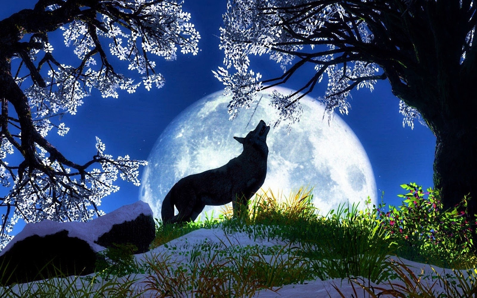 Image result for images of wolves in wild places
