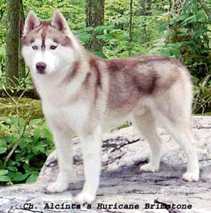 ntsy92: Jenis-jenis Anjing Berdasarkan Jenisnya