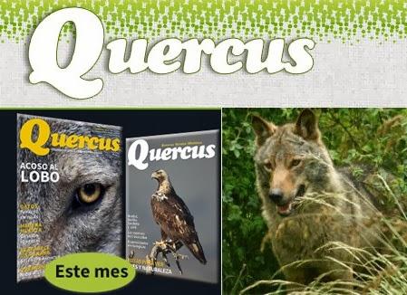 http://www.revistaquercus.es/noticia/5727/Editorial/Lobos-con-mala-prensa.html