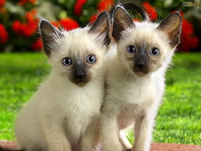 Fotos de gatinhos fofos #8