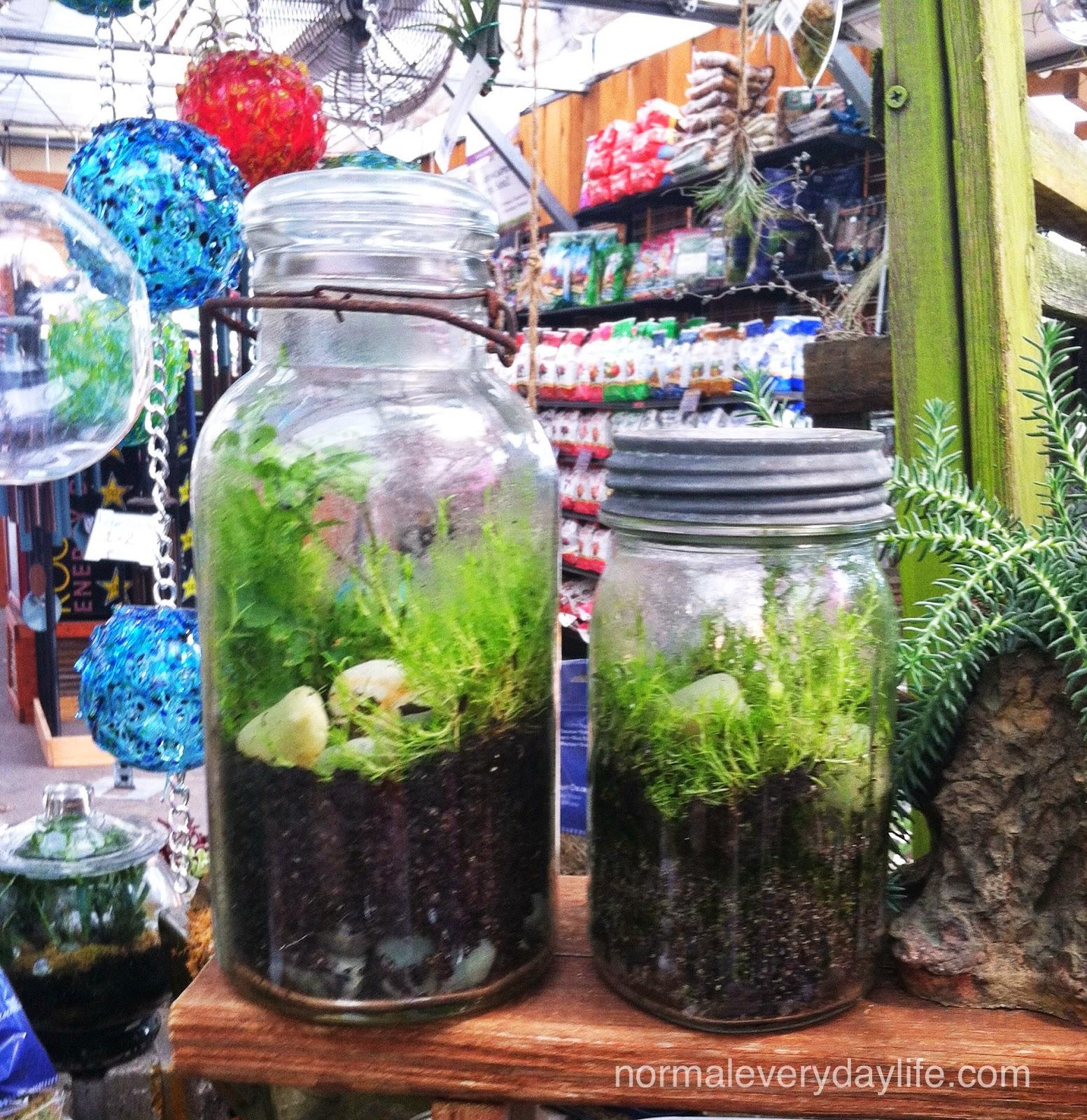 Normal Everyday Life Diy Mason Jar Terrariums