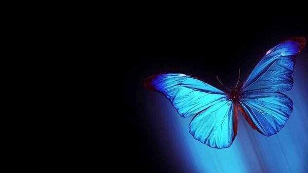 Desktop Butterfly Wallpaper Pictures Download