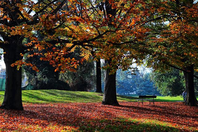 Boschetto autunnale nel parco della Pellerina a Torino