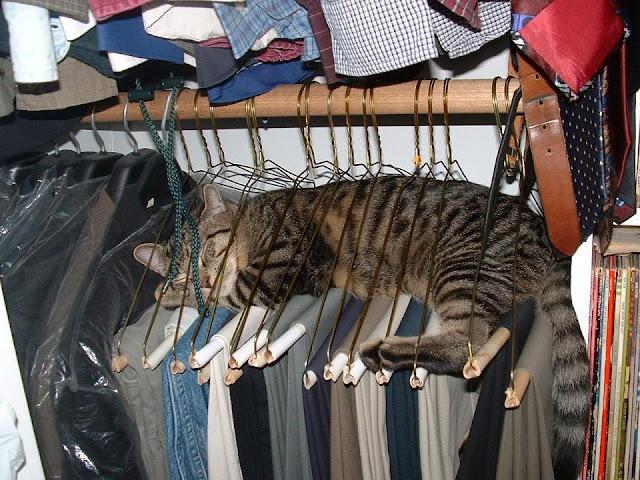 Cat sleeping on hangers image