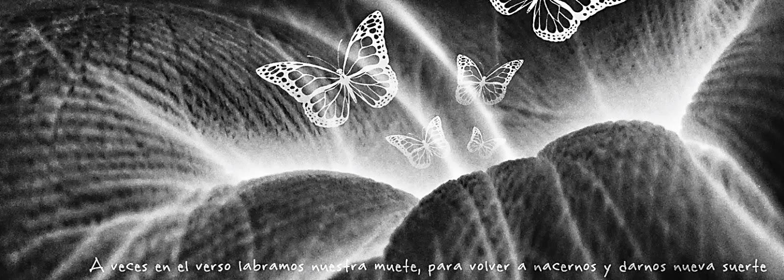 Como vuelan las mariposas