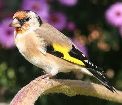 صور رمانسية طبيعية لأجمل الطيور 2014