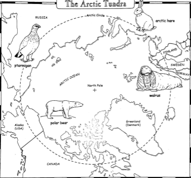 Go Back > Gallery For > Arctic Animals Worksheets For Kids