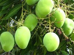 african-mango-3.jpg