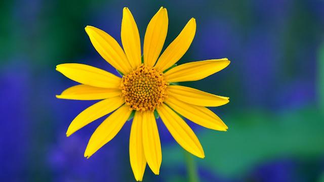 Yellow Flower Petals Macro Blurred Background HD Wallpaper