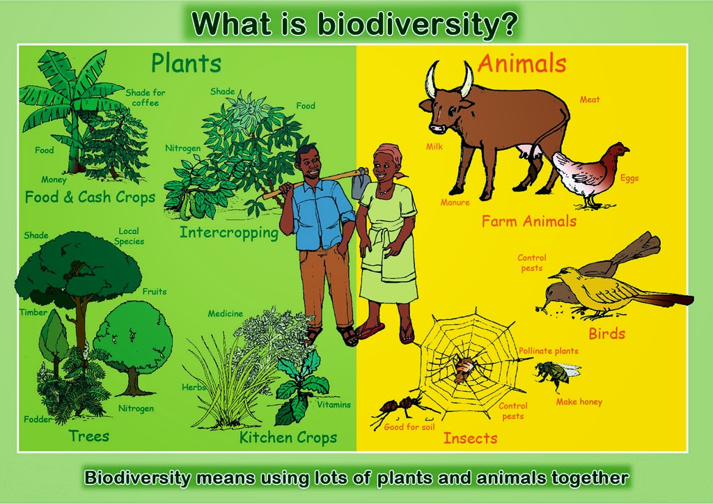 human effects on biodiversity Human impact on the environment or anthropogenic impact on the environment includes changes to biophysical environments and ecosystems, biodiversity, and natural resources caused directly or indirectly by humans, including global warming, environmental degradation (such as ocean acidification), mass extinction and biodiversity loss, ecological.