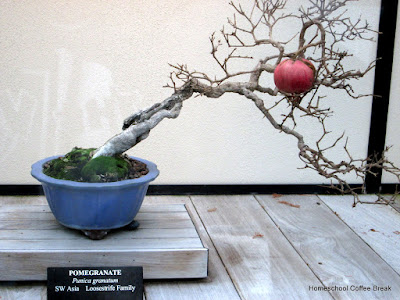 Bonsai - A Longwood Gardens PhotoJournal, Part One on Homeschool Coffee Break @ kympossibleblog.blogspot.com