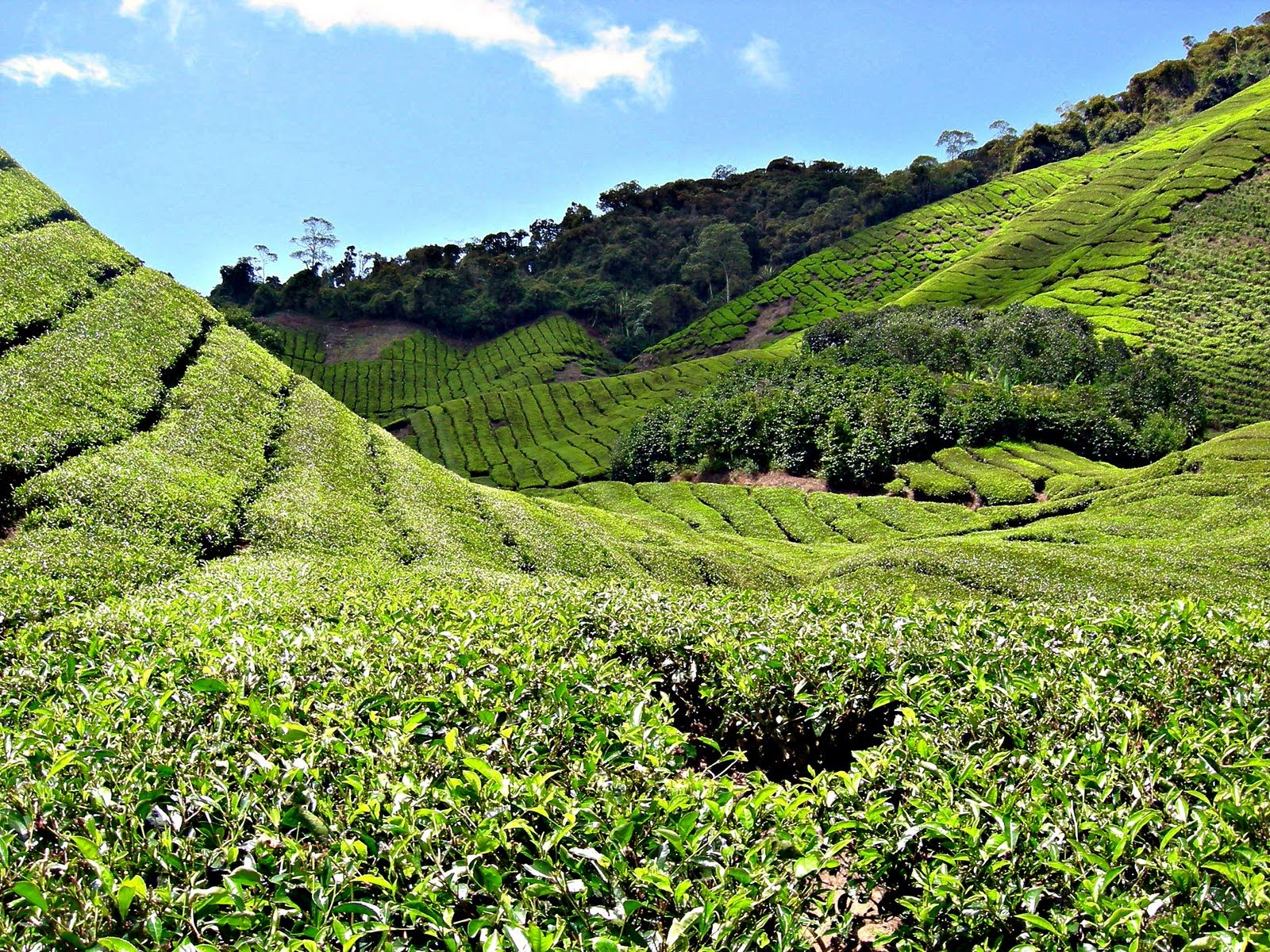 trip and tea plantations So there you have it a quick tour of the tea plantations at maokong if you want a break from the noise of the city, then a day trip to maokong is highly recommended.