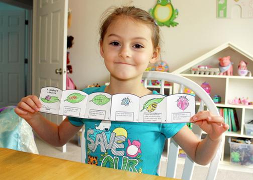 Blue House School Homeschooling one sweet girl Life Science – Ladybug Life Cycle Worksheet