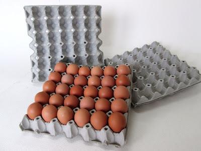 แผงไข่กระดาษ ถาดไข่กระดาษ ลังไข่กระดาษ ถาดไข่ ถาดกระดาษ จิ้งหรีด ห้องซ้อม