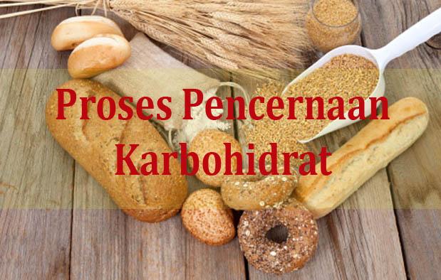 Proses Pencernaan Karbohidrat