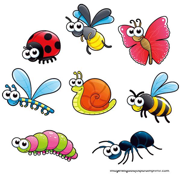 libelula, gusano, mariquita