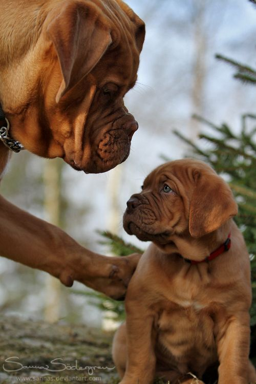 Top 10 Dog Breeds For Childern