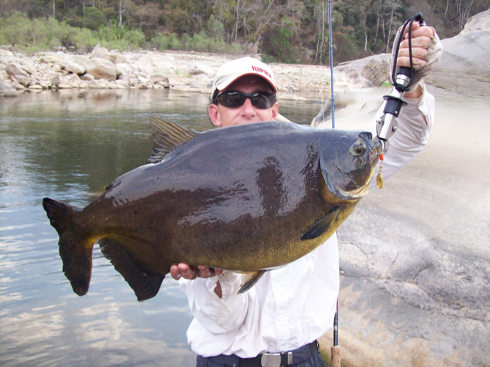 Biggest salt water fish ever caught freshwater fish for Large ocean fish